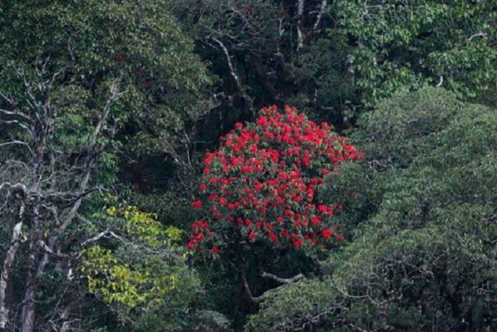 hoa đỗ uyên ở thác tình yêu sapa